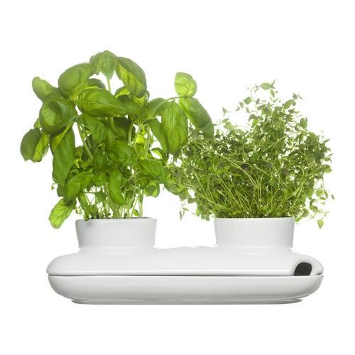 Herb Pot, Duo