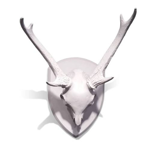 Mule Deer Skull with Antlers - Wall Decor for your Home