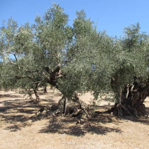 Starter Olive Oil & Vinegar Set | FIVE