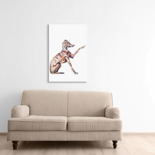 Italian Greyhound | Becksy