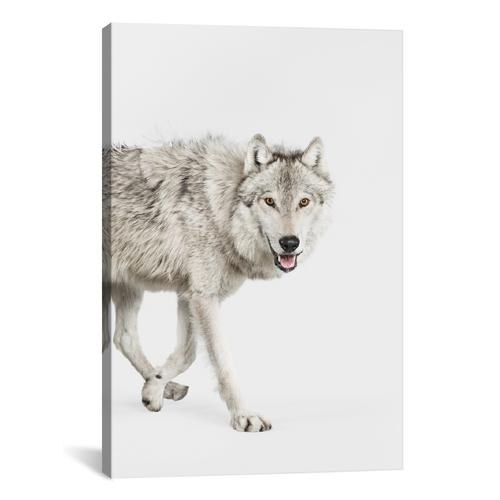 Gray Timber Wolf I